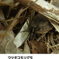 ウツギコモリグモ 2/18 陽だまりに多数