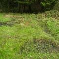 写真4 1番湿地の池の様子