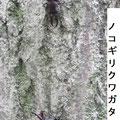 ノコギリクワガタ♂ 9/29