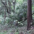 通路を塞ぐ倒木