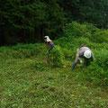 写真2 ツユクサ、カナムグラ刈り取り