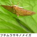 フチムラサキノメイガ   6/17  Km