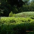 作業後 谷戸左岸から右岸を見て 湿高茎草は刈り、性ワラビ群生は保全