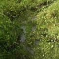 上流側作業地の湿性は改善されている