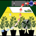 Hanfanbau Growroom Indoor Grow-system Cannabis Anbau