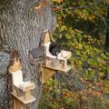 Unsere Eichhörnchen-Futterstation