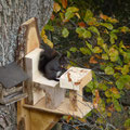 Unsere Eichhörnchen - Blick vom Balkon