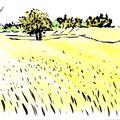 Champ dans la Sarthe - Encre et crayons aquarellables