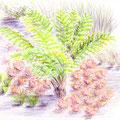 """Le toucher particulier des feuilles ciselées d'une fougère - """"Voir les sons, entendre les couleurs"""" au festival international des jardins de Chaumont sur Loire 2013 - Crayons de couleur"""