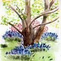 Scène printanière - Jardin Albert Kahn - Aquarelle