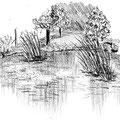 Fraicheur près d'un étang - Parc du Grand Blottereau à Nantes - Graphite