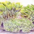 Plantes couvre-sol - Crayons de couleur