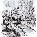 Passage ombragé dans une végétation luxuriante - Jardin botanique de Lisbonne - Encre et graphite