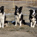 Winston *2010, Monty *2001, Jola *2005