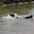 1. Schwimmversuch