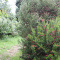 Camino de nuestro jardín