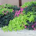 Jardineras para delimitar una terraza