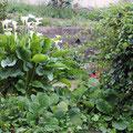 Detalle del Jardín de La Silvestre