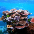 A variety of corals form an outcrop on Flynn Reef, part of the Great Barrier Reef near Cairns, Queensland, Australia. Toby Hudson (Wikimedia Commons,http://commons.wikimedia.org/wiki/File:Coral_Outcrop_Flynn_Reef.jpg)