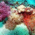 Soft Coral,Great Barrier Reef, From eAtlas licenced under CCBY-SA