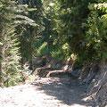 Piste forestière en Bauges