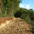 Piste forestière en Chautagne