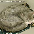 Котик, 2,5 кг