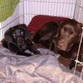 Finch und Toni im Kennel