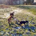 Toni, Finch, Finn und Ruby, 22.1.2016
