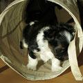 Daiichi 6 Wochen alt, 875 g