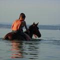 Pferdeschwemme am Bodensee