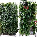 Grüne Schallwände Planted Wall