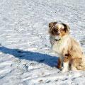 06.02.2012 - Foxi, die Schnee-Nase