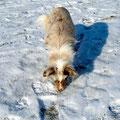 06.02.2012 - Foxi schnüffelt an den Fußspuren