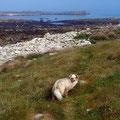 Kleine Insel bei Ebbe erreichbar, Bretagne