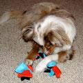 08.02.2012 - Foxi und der Zopf