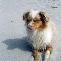 Foxi am Strand, Frankreich