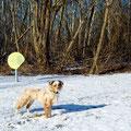 06.02.2012 - Foxi vom Wäldchen - Bitte nicht betreten!