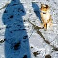 06.02.2012 - Foxi mit Frauchen