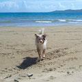 am Strand vor dem Insel Sapienza, Peloponnes, Griechenland