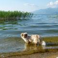 Noch einmal am Prespa-See, Nordgriechenland