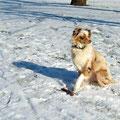 """06.02.2012 - Stöckchen """"aus"""" und """"bleib"""" in der Sonne"""