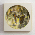 C-Falter/ Comma Butterfly, Oil on Wood, D26cm