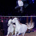 The flying frenchman! Lorenzo und zwei Pferde seiner großen Schimmelherde!