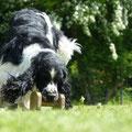 und Rini auch, er ließ mal gleich den Rasen fliegen :-)))