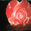 33 Rose im Wasser m.Rahmen   Acryl/Keilrahmen 50x40   125 €