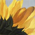 29 Sonnenblume    Acryl/Keilrahmen 50x50     55 €
