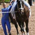Pferd und Voltis beim Warmlaufen