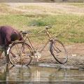 Leben am Fluss - Kazinga Channel