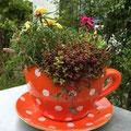 Bepflanzung einer «Blumentopf-Kaffetasse» mit Sukkulenten